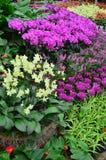 сад 012 Стоковая Фотография