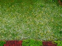 сад Стоковое Изображение