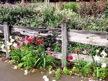 сад 2 коттеджей Стоковое Изображение RF