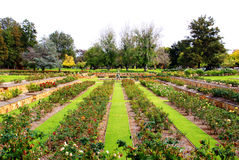 сад adelaide Австралии официально поднял Стоковые Фото