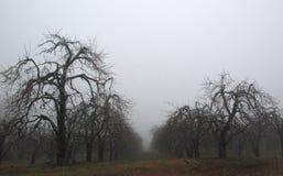 Сад Apple в зиме стоковые изображения rf