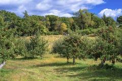 Сад Apple и заплата тыквы стоковые изображения