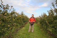 Сад Apple стоковые изображения