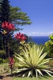 сад arboretum ботанический Стоковые Изображения
