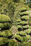 сад buchart Стоковое Изображение RF