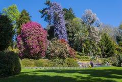 Сад Carlotta виллы Стоковые Изображения RF