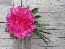 сад centerpiece напольный стоковая фотография rf