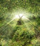 сад eden Стоковая Фотография RF
