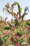сад flourish поднял стоковая фотография
