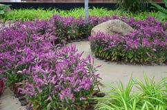 Сад flower7 Стоковые Изображения