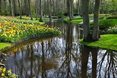 Сад Keukenhof цветочные сады ` s мира самые большие, расположенные в Lisse, Нидерланды Стоковое фото RF