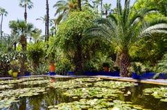 Сад Majorelle в Marrakech Стоковое Изображение