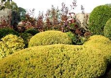 сад oniferous Стоковая Фотография