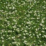 Сад Oporto с красивыми цветками стоковые изображения