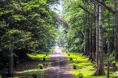 Сад Purwodadi ботанический, Pasuruan, Индонезия стоковая фотография rf
