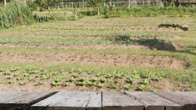 саженец завода в vegetable графике & x28; image& x29 нерезкости; с выбранный стоковое фото rf