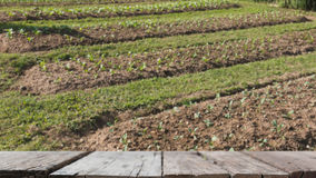 саженец завода в vegetable графике & x28; image& x29 нерезкости; с выбранный стоковое фото