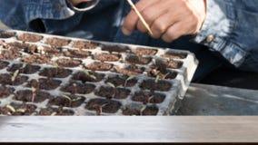 саженец завода в vegetable графике & x28; image& x29 нерезкости; с выбранный стоковые изображения rf