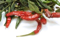 Саженец chili положил для того чтобы высушить 02 Стоковая Фотография