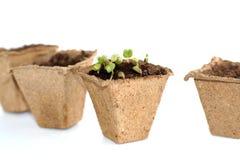 Саженцы весны для вашего малого сада Стоковые Фото