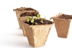 Саженцы весны для вашего малого сада Стоковая Фотография RF