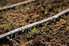 Саженцы вытекают от почвы весны стоковое фото rf