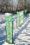 Саженцы дерева защищенные с зеленой сеткой Стоковое фото RF