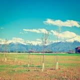 Саженцы дерева Стоковое Фото