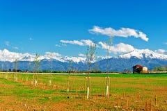 Саженцы дерева Стоковая Фотография RF