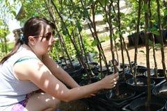 Саженцы женщины касающие заводов Стоковая Фотография