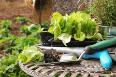 Саженцы и садовые инструменты стоковые изображения rf