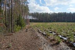 Саженцы и старый лес Стоковые Изображения