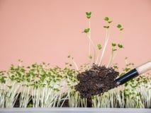 саженцы растя в почве с полным минералом стоковая фотография rf