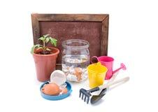 Саженцы томатов и eggshell в опарнике с водой на белой предпосылке Стоковое Изображение RF