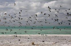 Сажные птицы тройки Стоковые Фотографии RF