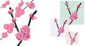 Сакура ветви вишневого дерева с концом-вверх цветков и бутонов вишни Рамка на предпосылке другого цвета Стоковое Изображение RF