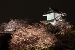 Сакура зацветая на замке Kanazawa Стоковые Фотографии RF