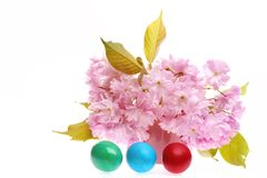 Сакура и яичка Стоковое Фото