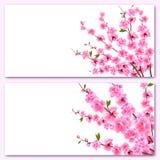 Сакура - 2 карты Декоративные цветки вишни с бутонами на ветвях, букете Смогите быть использовано для приглашений стоковые фото