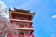 Сакура с башней Стоковая Фотография RF