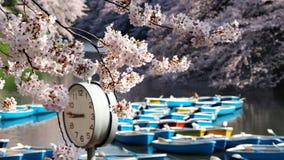Сакура, японский вишневый цвет Стоковые Фотографии RF