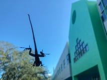 саламандр на окне стоковые фото