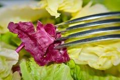 салат вилки зеленый Стоковая Фотография