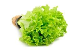 Салат в баке изолированном на белой предпосылке Стоковое Изображение
