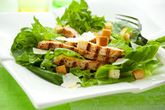 салат из курицы цезаря Стоковые Фото