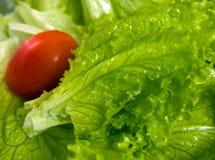 Салат и томат Стоковые Фотографии RF