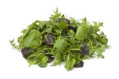 Салат листьев младенца Стоковые Фотографии RF