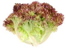 салат листьев пука стоковое изображение rf