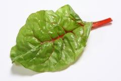 салат листьев Стоковые Фото