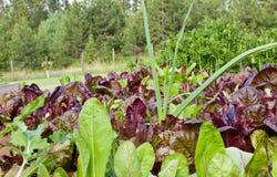 салат лук-порея Стоковая Фотография RF